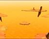Franz Hopper 227