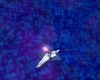 Tarentule au plafond 005